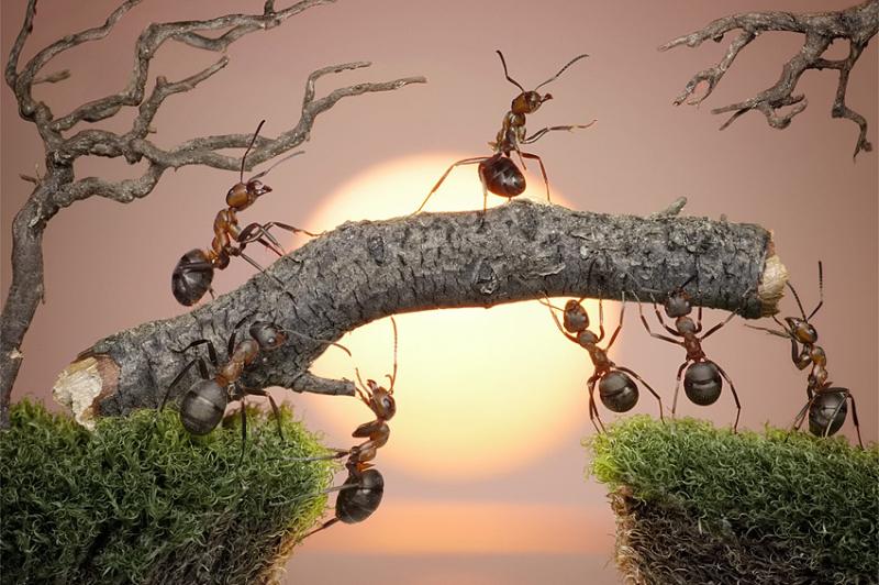 exposition mille milliards de fourmis