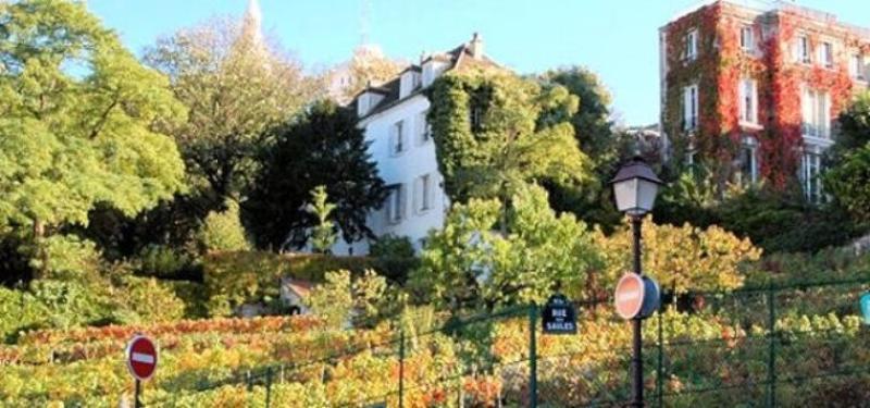 vignes montmartre