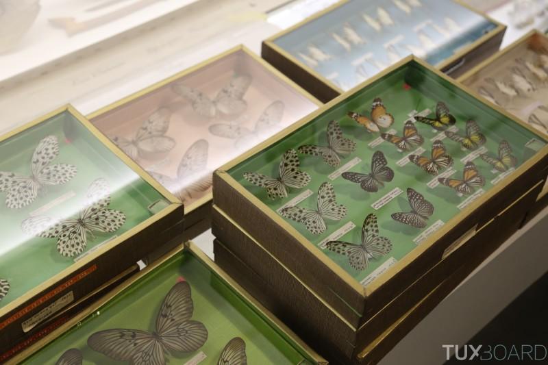 Chambre-des-merveilles-Musee-des-Confluences-papillons