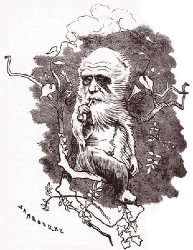 3943_Darwin_arbre