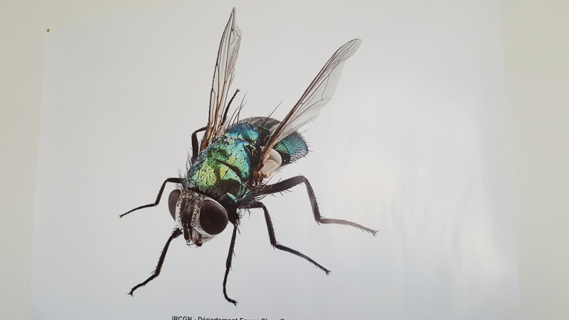3_ircgn-entomologie