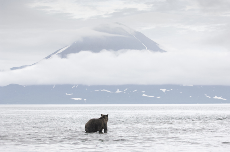 l'ours et llinsky Vincent Munier