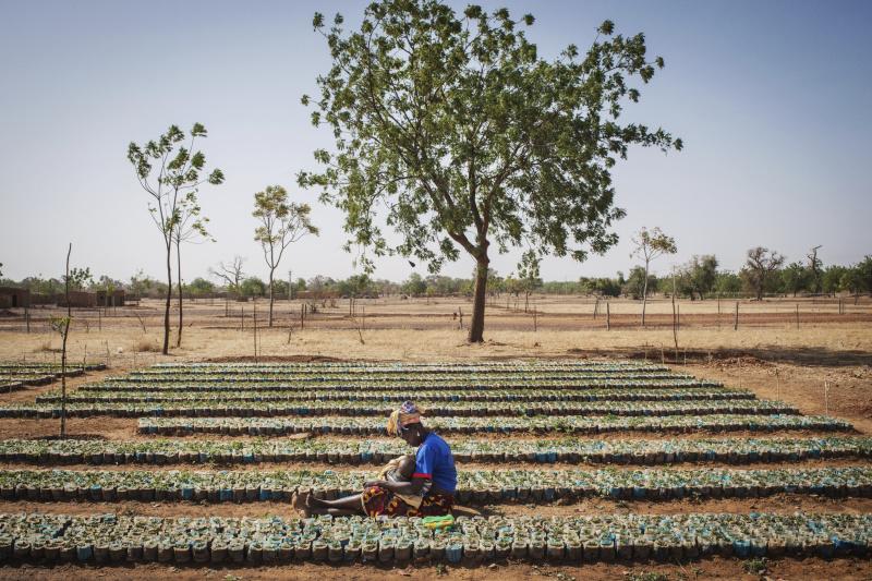 Planter des arbres pour faire reverdir le Sahel. L'association Terre Verte encourage la plantation des arbres au Burkina Faso depuis plus de trente ans.