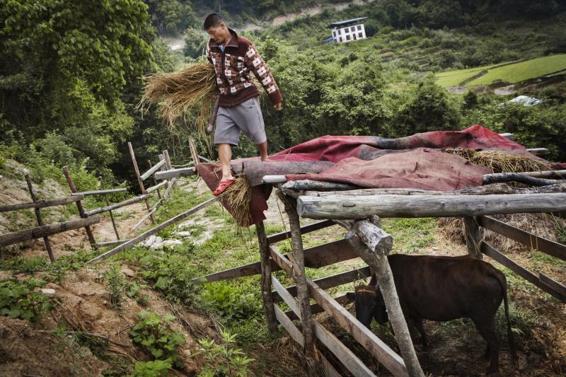 Sangay Dorji a appris a faire du fumier qui sert de fertilisant naturel pour nourrir le sol de son potager. La nuit, dans son abri, leur vache repose sur un lit de fougere qu?il va cueillir dans la foret. Pour obtenir un insecticide naturel, il melange de l?urine et du lait de vache dilue avec de l?eau. Quant au desherbage, il se fait manuellement.