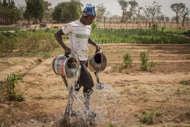 Les agriculteurs qui mettent en pratique les techniques de l'agroecologie arrivent a cultiver des legumes toute l'annee sur les terres arides du Sahel.