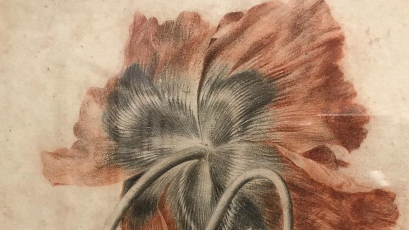 Exposition Pierre-Joseph Redoute le pouvoir des fleurs musee de la Vie Romantique Paris1873