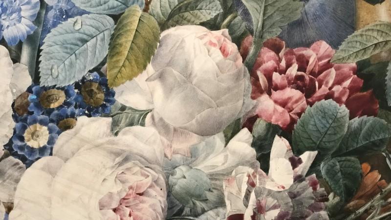 Exposition Pierre-Joseph Redoute le pouvoir des fleurs musee de la Vie Romantique Paris1890
