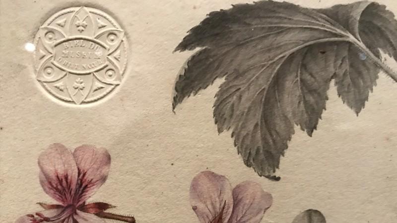 Exposition Pierre-Joseph Redoute le pouvoir des fleurs musee de la Vie Romantique Paris_1872