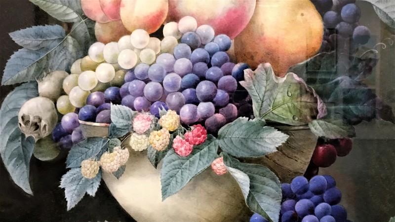 Exposition Pierre-Joseph Redoute le pouvoir des fleurs musee de la Vie Romantique Paris_1905