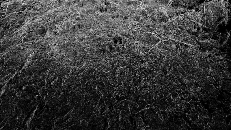 Sonia Levy, Entités, 2017, Animer le paysage, Musée de la chasse et de la nature