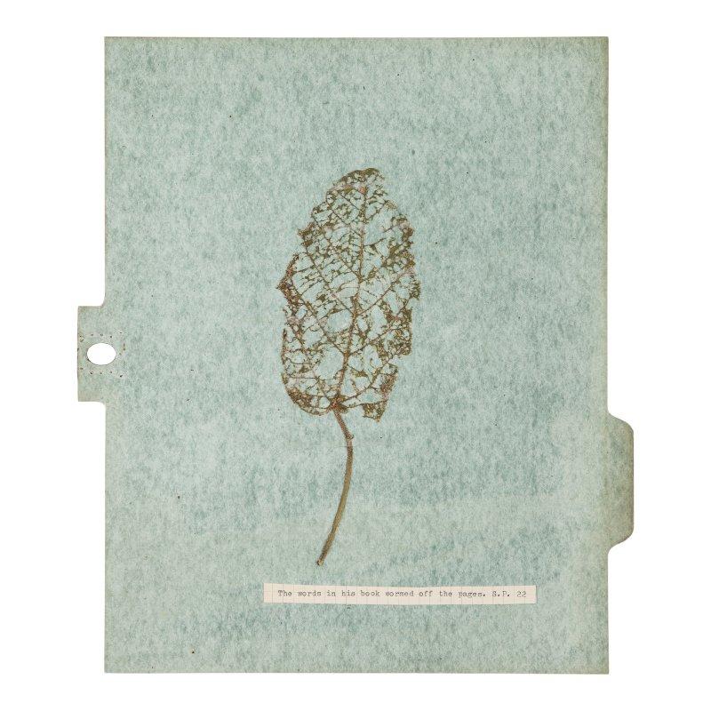 Sans titre, Série Herbier (12 planches),feuille rongée, Johanna Calle, Maison de l'Amérique Latine