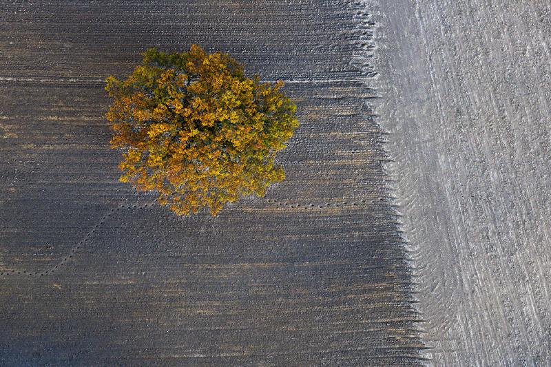 Autumn#11, Kacper Kowalski, Galerie Photo12