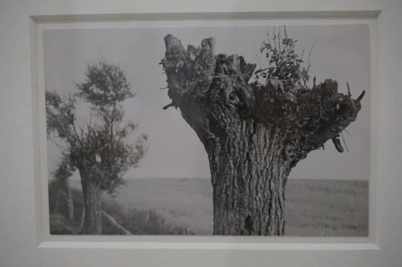 Vue de l'exposition Raoul Hausmann - Jeu de Paume (37)