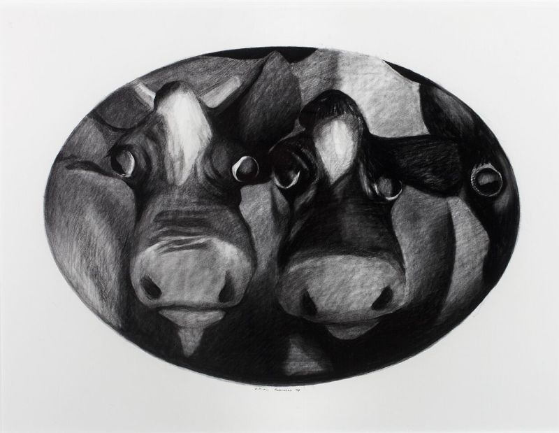 Cow portrait (Oval format),1979