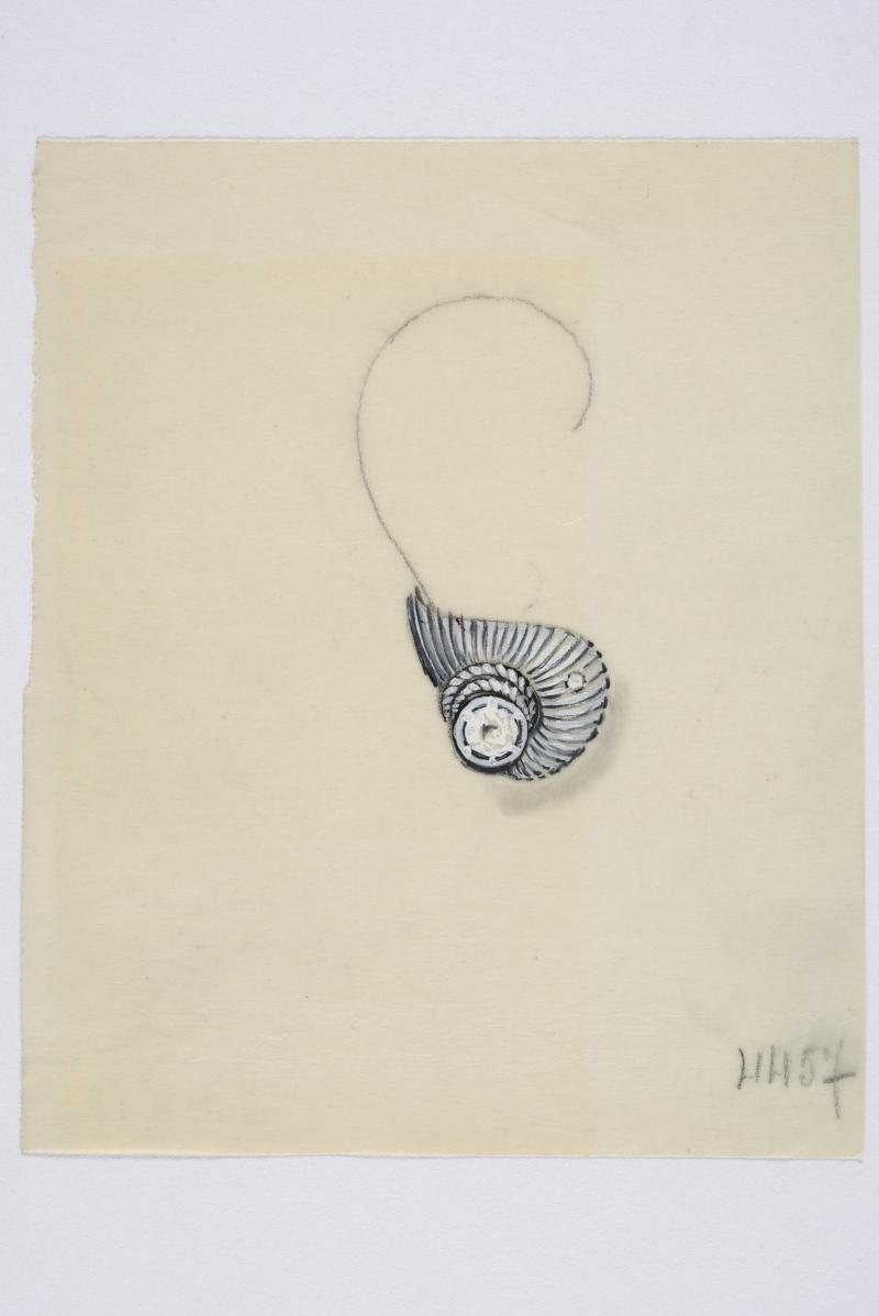 Anonymes, Maquettes pour bijoux,entre 1920 et 1940 Gouache et crayon sur papier Collection Dael & Grau Photo A Leprince
