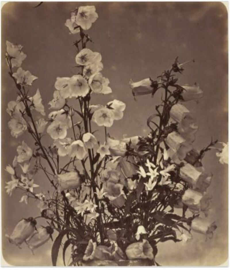 Adolphe Braun, Bouquet de pieds-d'alouette et de digitales, vers 1855
