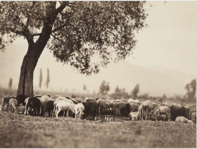Adolphe Braun, Troupeau de moutons s'abreuvant, Vers 1858