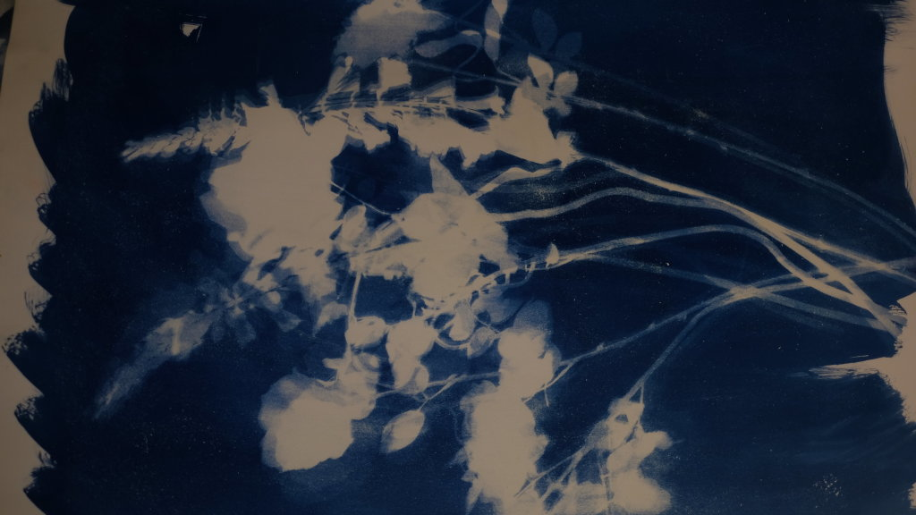 carolyn quartermaine cyanotypes 6© Carolyn Quartermaine