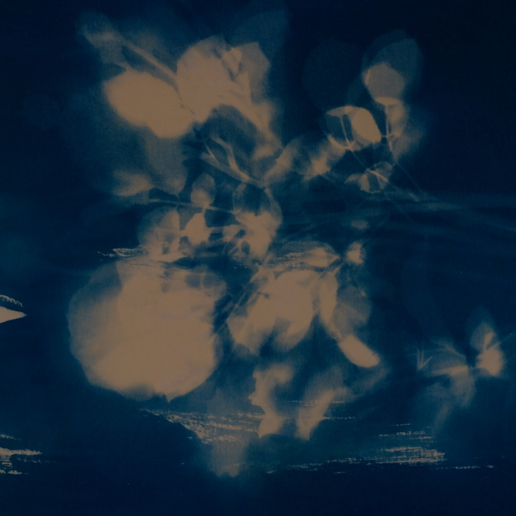 Carolyn Quartermaine, Cyanotypes