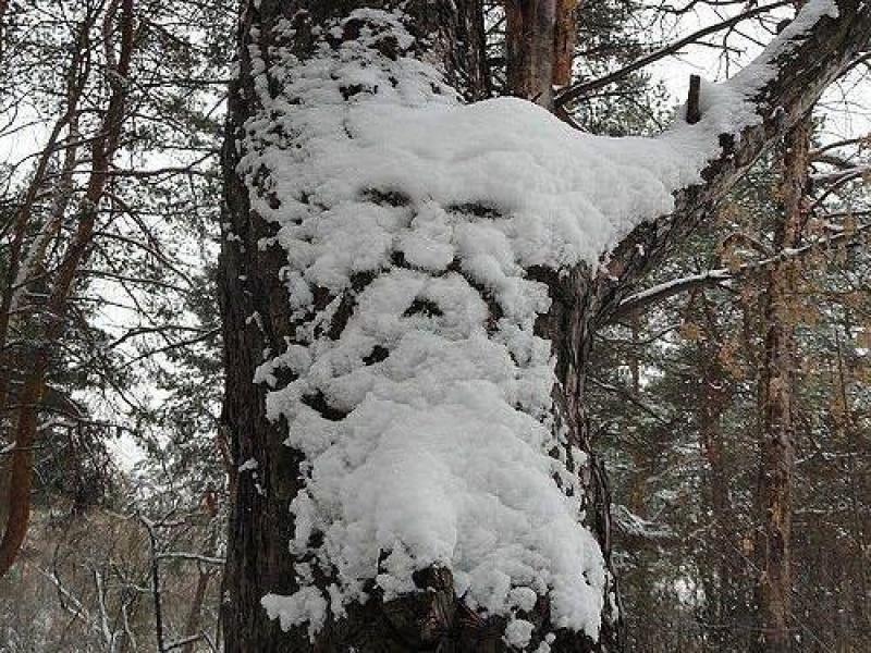 Top des bonhommes de neige (45)