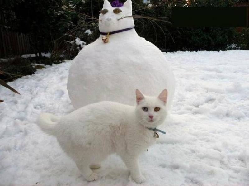 Bonhomme chat