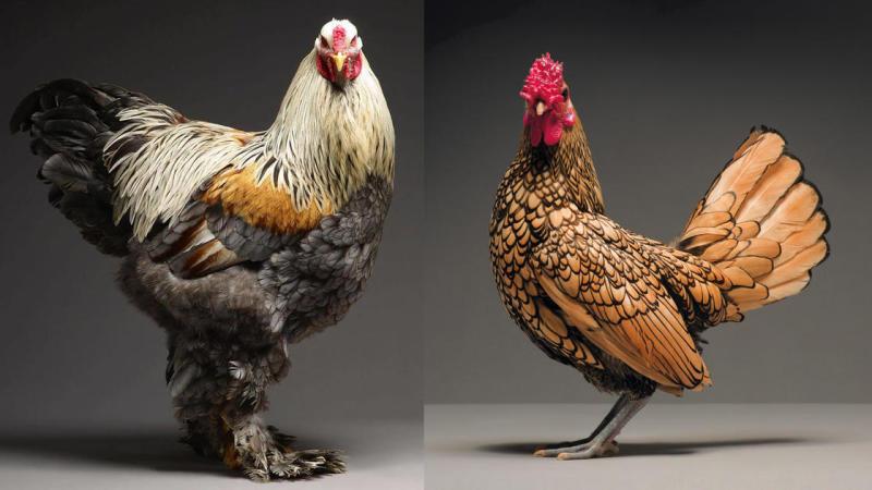 01. Chicken