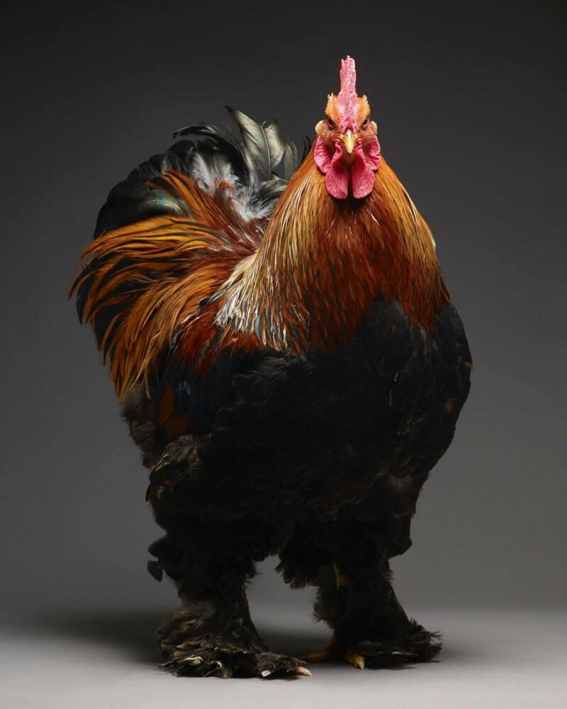 07. Chicken