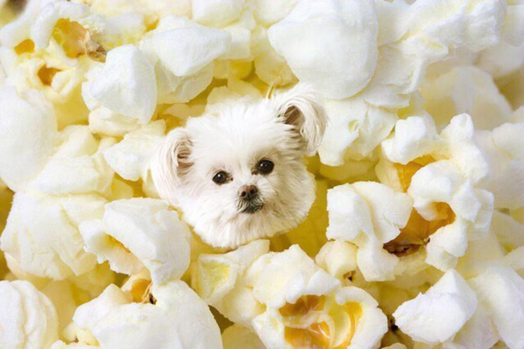 12. dogs in food