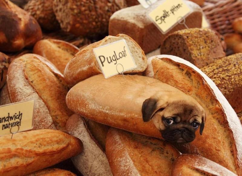 14. dogs in food