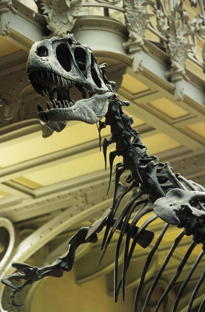 Allosaurus exposé dans la Galerie de Paléontologie et d'Anatomie comparée