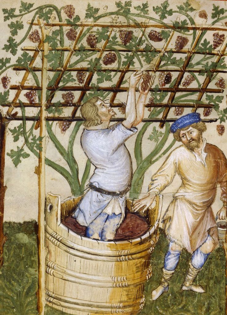 Foulage sous la pergola, Ibn Butlan, Tacuinum sanitatis, vers 1395, © BnF, Paris