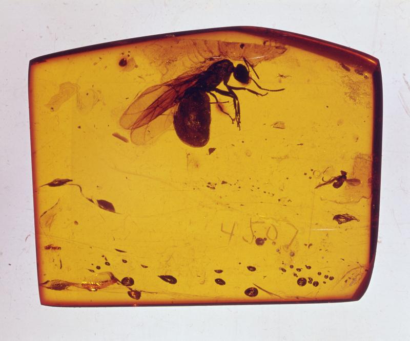 Fourmi ailée incluse dans un bloc d'ambre