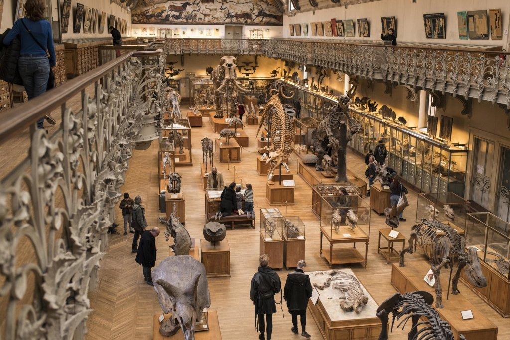 La Galerie de Paléontologie et d'Anatomie comparée