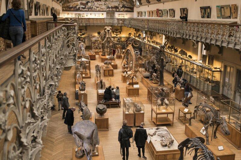 Galerie de paléontologie - GPAC avec public