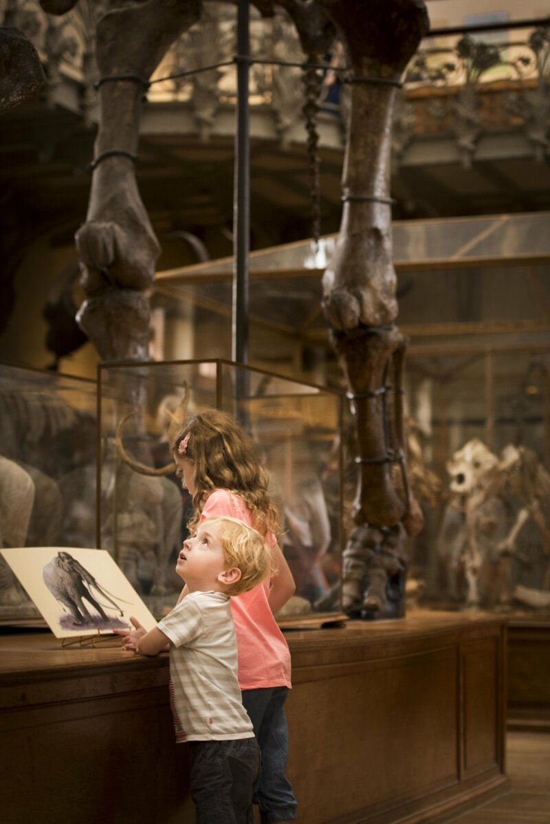 Galerie de paléontologie avec public (gros plans)