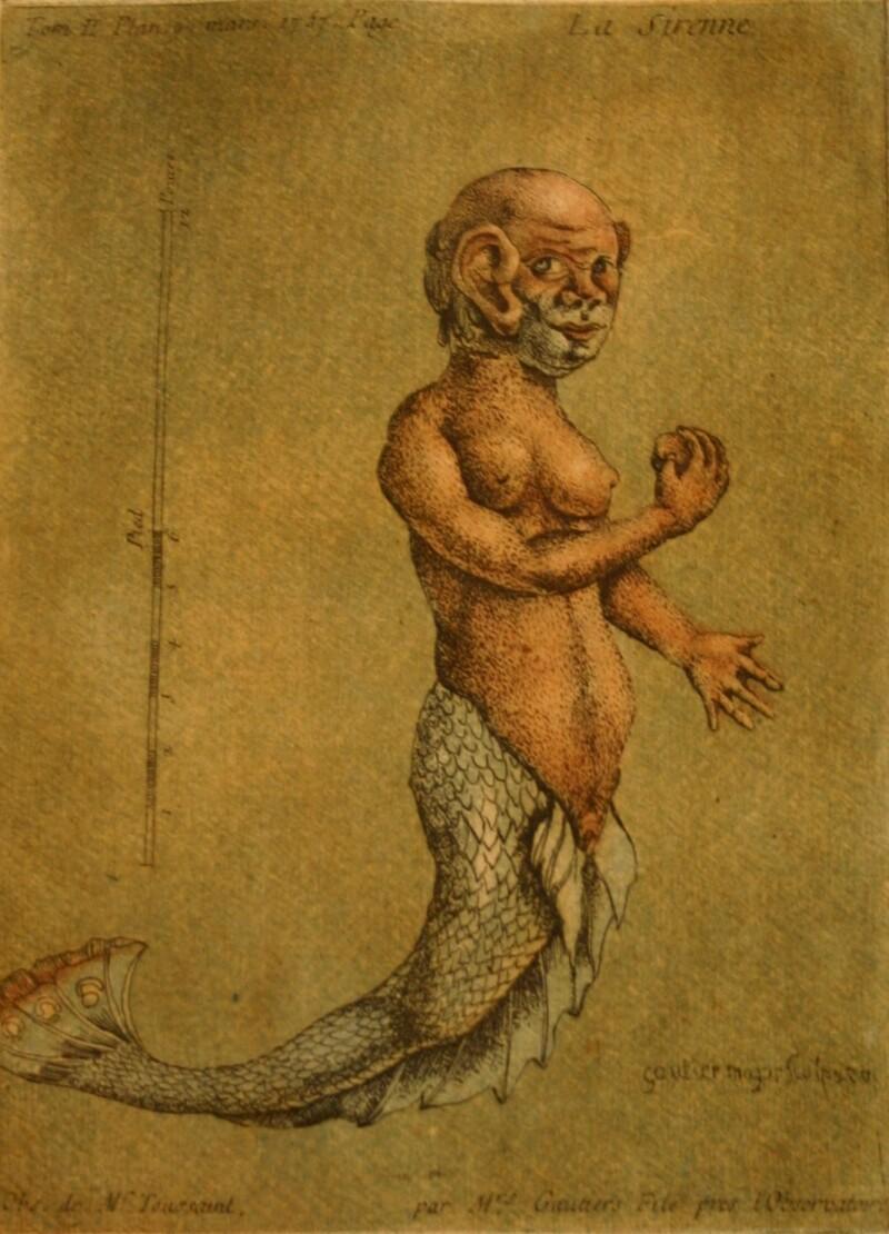 Jacques Gauthier d'Agoty Observations périodiques sur la physique, l_histoire naturelle et les arts 1756-1757 Librairie Ormara