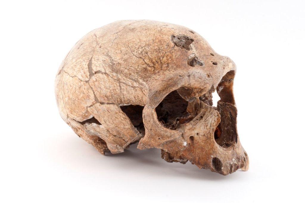 L'Homme de La Chapelle-aux-Saints, paléolithique moyen, France b