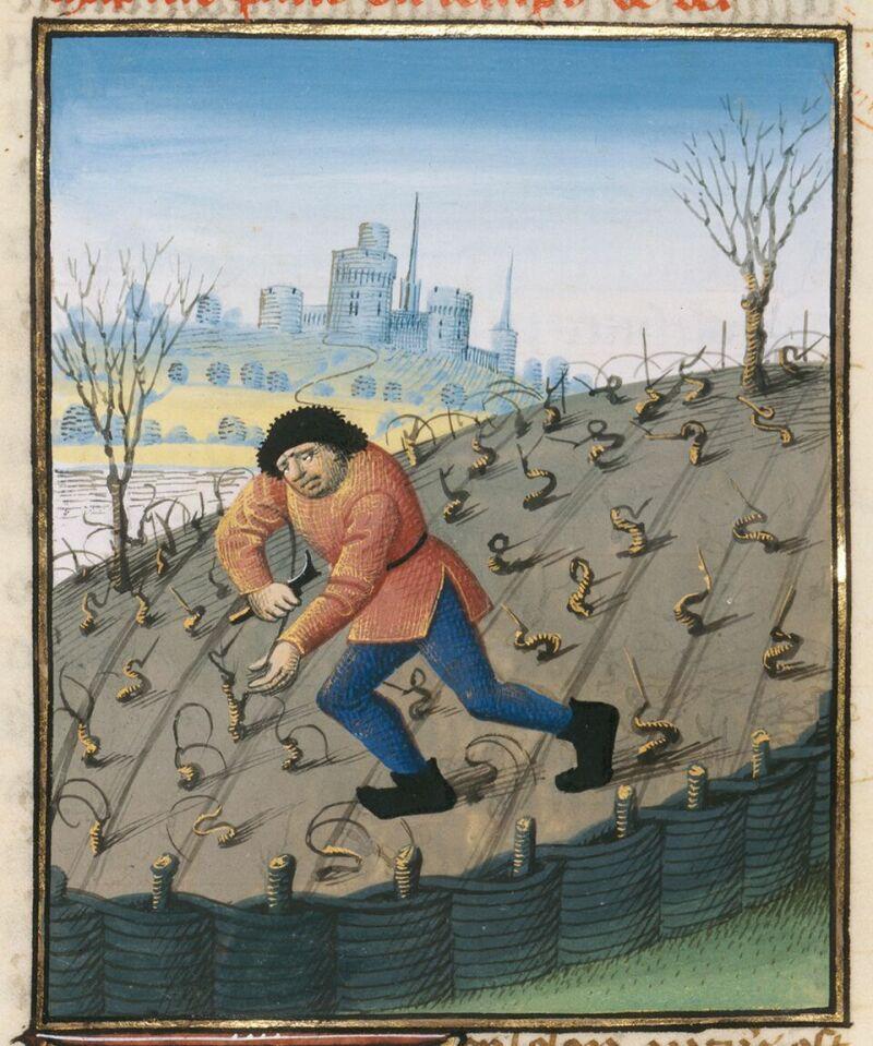 Taille de la vigne à la fin de l'hiver. Barthélemy l'Anglais, Livre des Propriétés des choses, 1480, Paris, © BnF