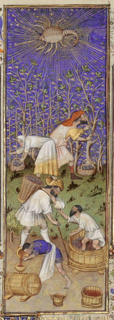 Vendanges à la main Grandes heures de Rohan, Anjou, vers 1430, © BnF, Pari