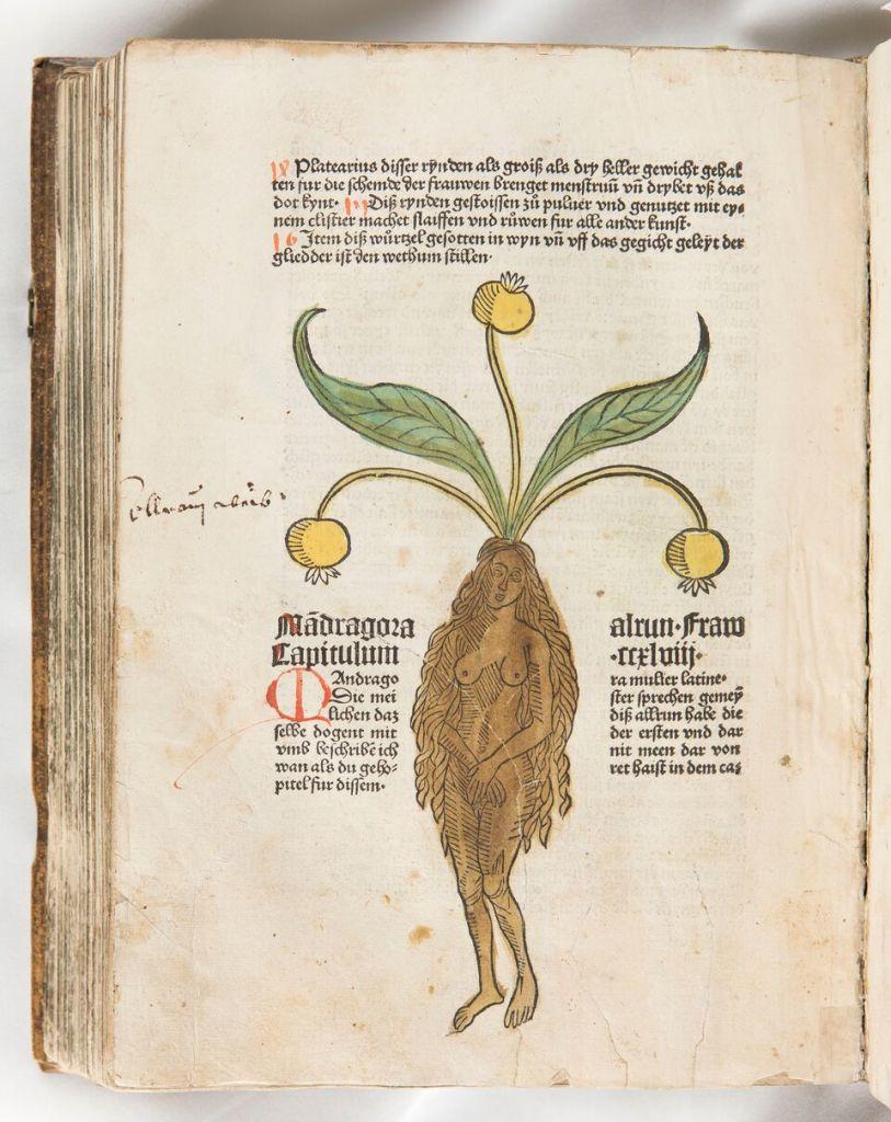 Golestān [La Roseraie], Chiraz 1320, Fondation Martin Bodmer, CB 529.Pietro de' Crescenzi, Le livre des prouffitz champestres, Peter Drach, Speyer 1490-1495, colle