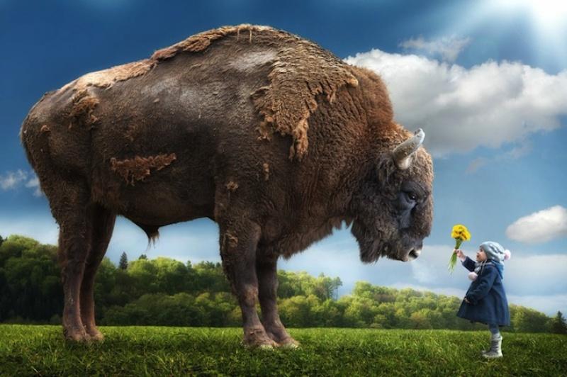 John Wilhelm - bison