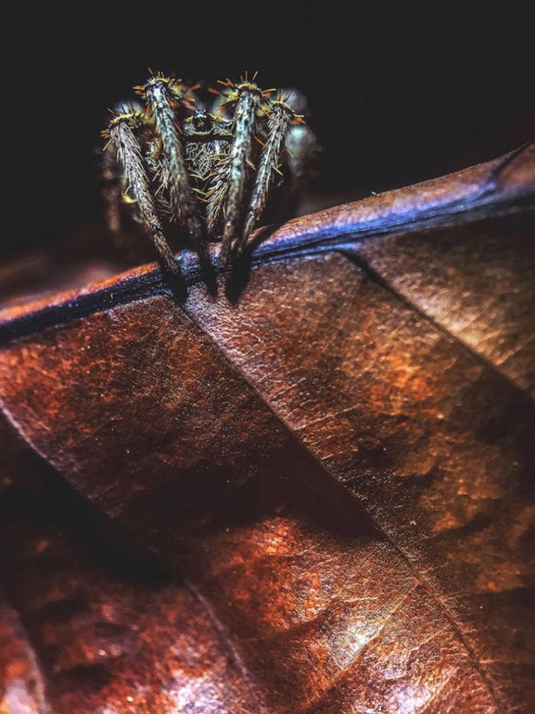 Leaf Creeper. (© Geoff Cunningham, gagnant de la catégorie macro et détails)