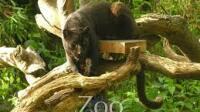 Panthère - Zoo La Boissière du Doré