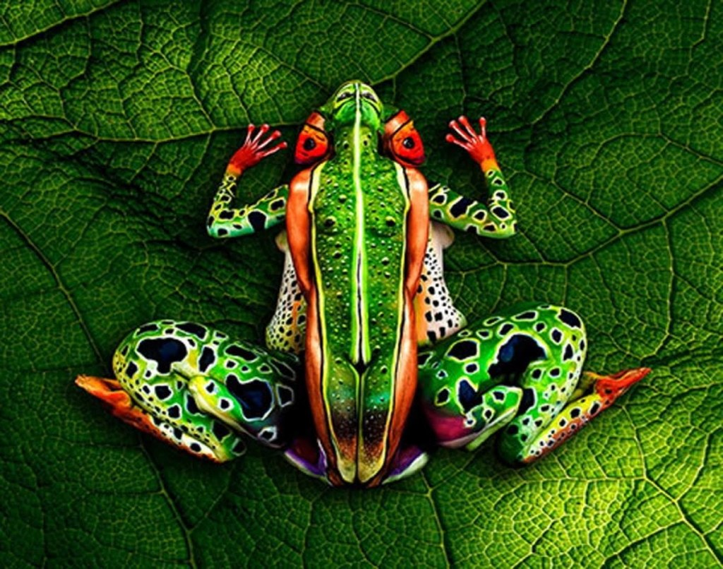 The frogg leaf