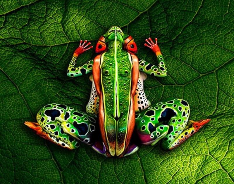 The frogg leaf