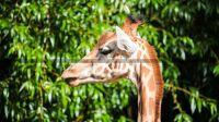 zoo-des-sables-olonne