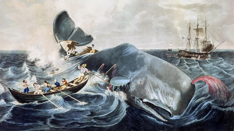 In addition to Herman Melville's own experience on the whaling ship Acushnet, two real events served as the genesis for his Moby Dick. One was the sinking of the Nantucket ship Essex in 1820, after a sperm whale rammed her 2,000 miles (3,200 km) from the western coast of South America.  The other event was the alleged killing in the late 1830s of the albino sperm whale Mocha Dick, in the waters off the Chilean island of Mocha. Mocha Dick was rumored to have 20 or so harpoons in his back from other whalers, and appeared to attack ships with premeditated ferocity.