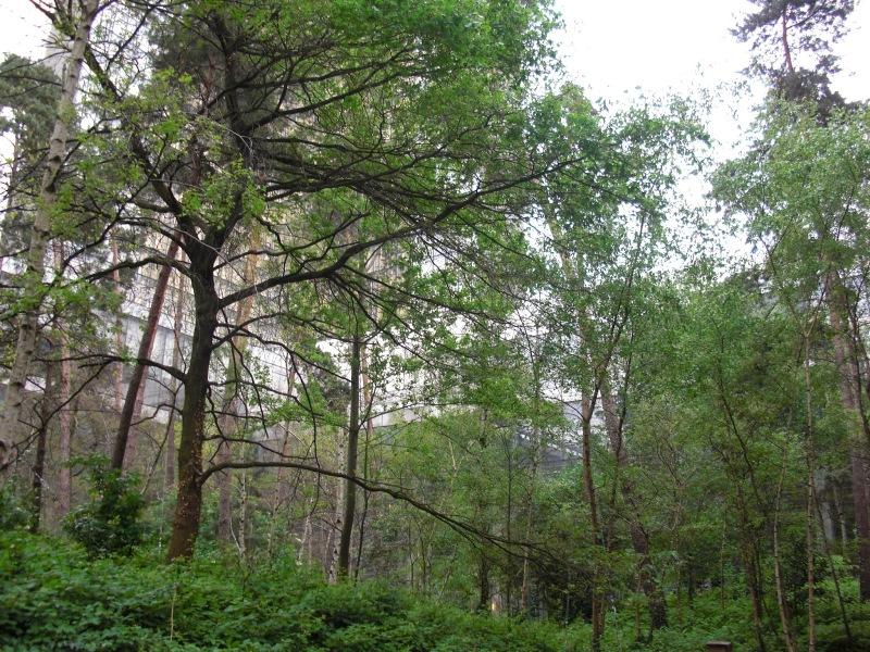Jardin forêt BNF