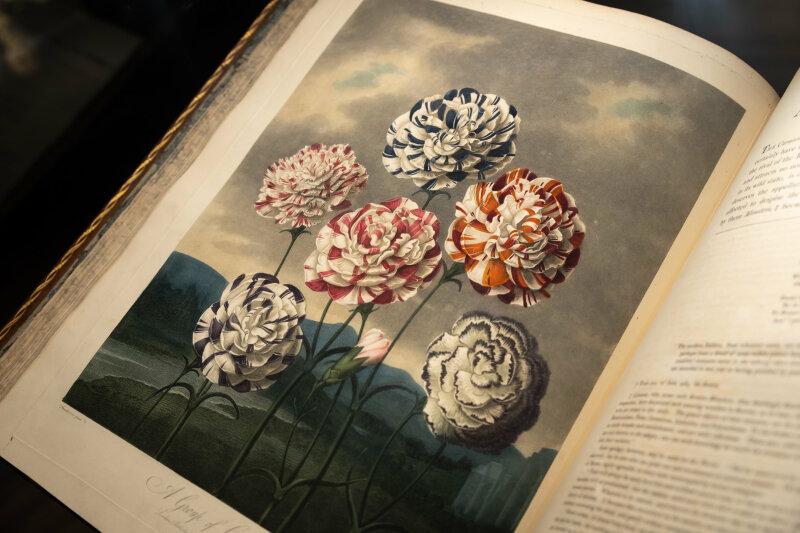 Vue de l'exposition Jardins - Fondation Martin Bodmer