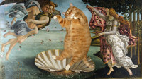 botticelli-the-birth-of-venus-cat-sm